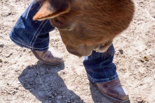 10Virginia Horse Farm050717