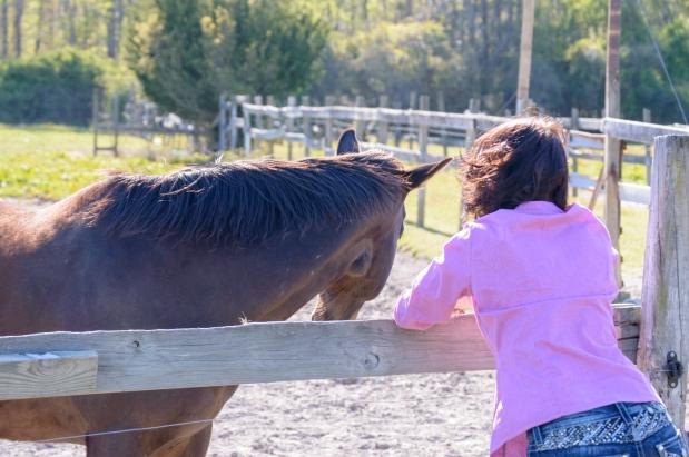5Virginia Horse Farm050617