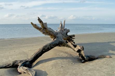 driftwoodDSC_1440