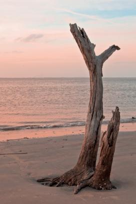 tall driftwoodDSC_1497